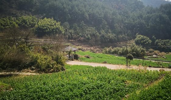 中国纸浆制造行业分析 木浆消费进口依赖性强